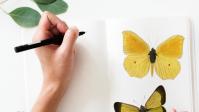 Cours de dessin, aquarelle, décoration Soings en Sologne,Contres,Blois,Romorantin,Loir et Cher